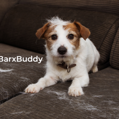 Dog Grooming Tips From BarxBuddy: Possible To Control Shedding?